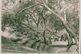 Amphitheater under oaks and sycamores at Chautauqua Camp, Temescal Canyon, Calif.