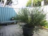 Patio area in the Fairview Branch Library (2101 Ocean Park Blvd.), May 2, 2014, Santa Monica,...